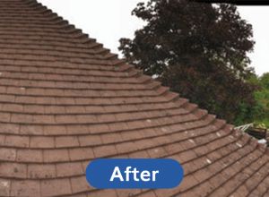 After-Roof-Cleaning