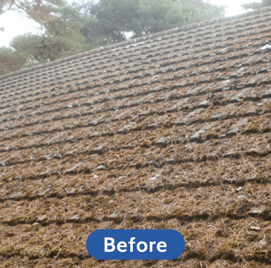 Before-Moss-Cleaning
